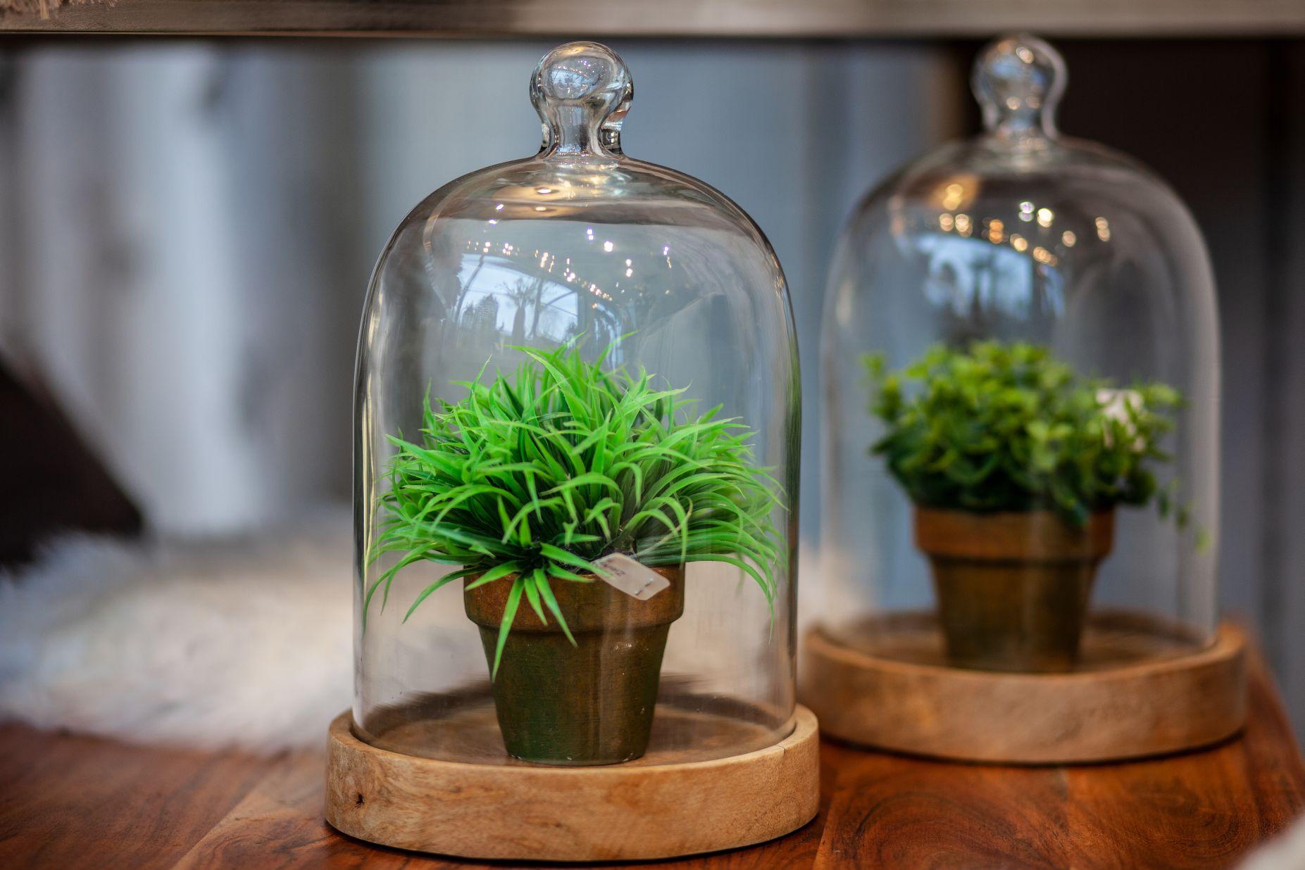 Mini Pflanzen Ege Mühldorf